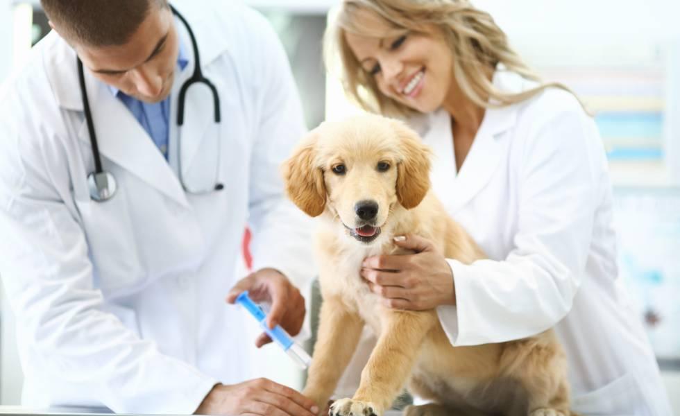 Excelentes cursos de veterinaria Madrid